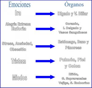 emociones-organos