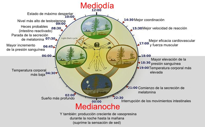 Alt=ciclo circadiano